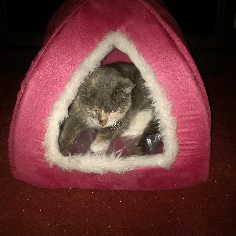 artic cat wildcat