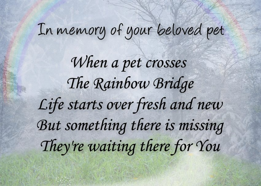 After Cats Cross over the Feline Rainbow Bridge: One Day we will be reunited