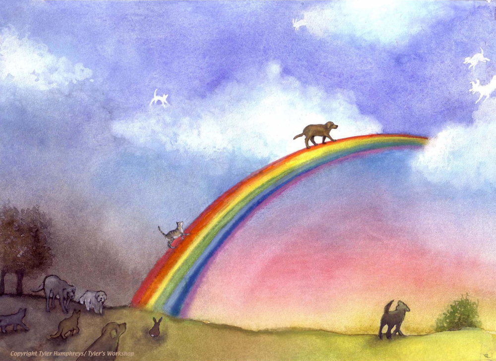After Cats Cross over the Feline Rainbow Bridge: One Day ...