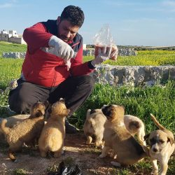 Aleppo's heroic cat rescuer rebuilds his sanctuary in the countryside to the west