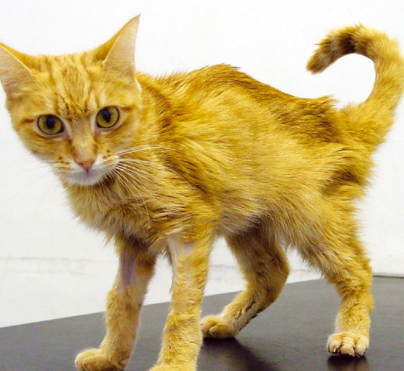 Do cats with renal failure suffer?
