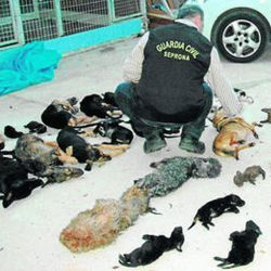 Head of animal shelter jailed for over 2000 cases of animal cruelty