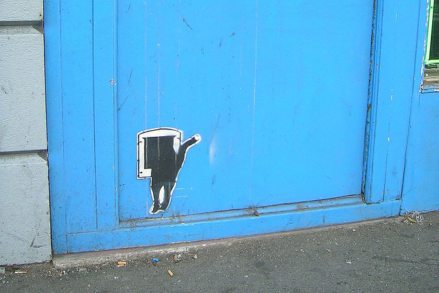 How do I get my cat to use a cat flap?