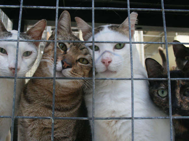 How much does a cat shelter spend on veterinary bills?