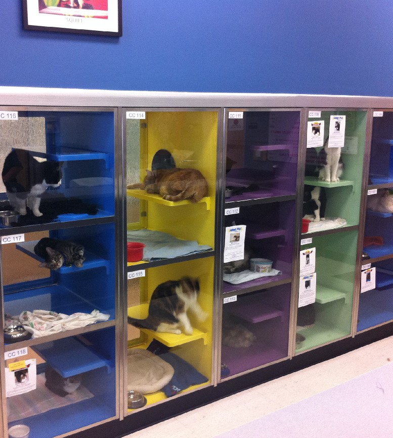 Cat Shelters: Attracting Viewer Interest and Increasing the Likelihood of Adoption