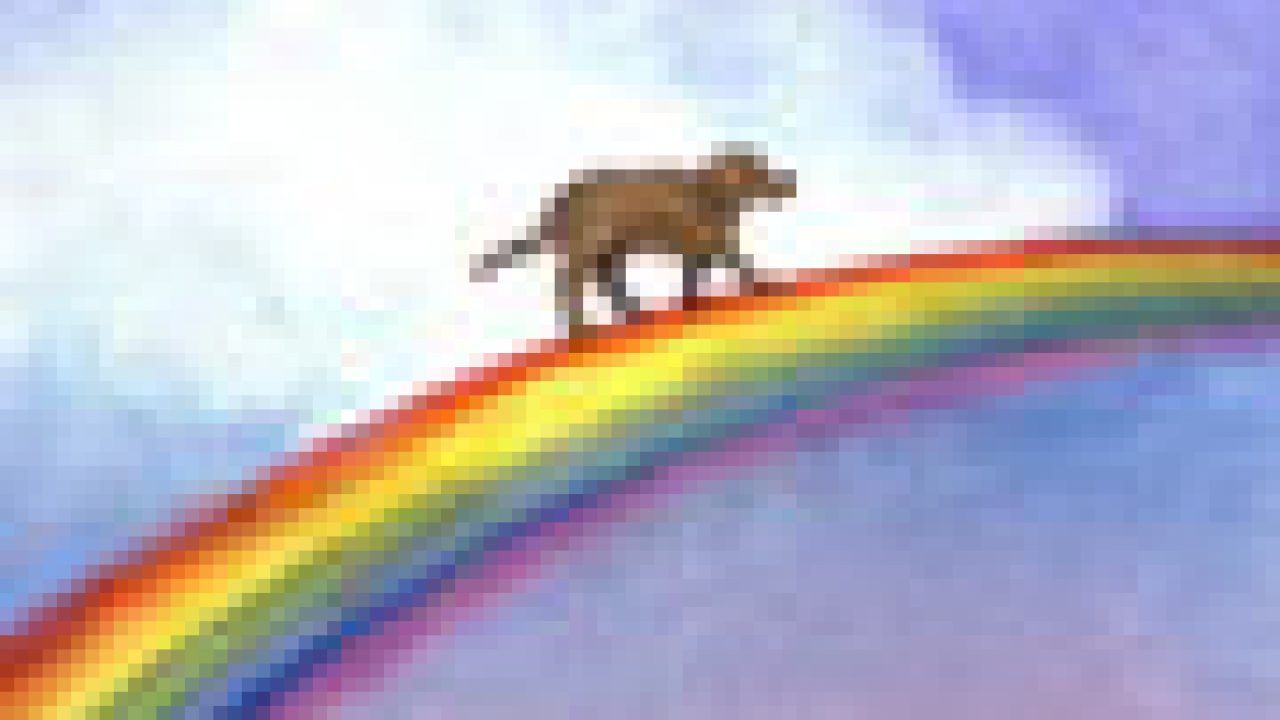 After our Cats Cross the Feline Rainbow Bridge: One Day we