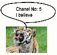 Tiger smells perfume