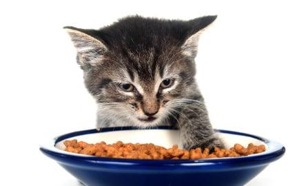 Should cats eat small meals often?