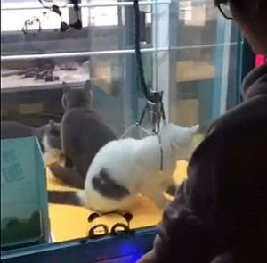 Uproar and comments fly as live cats are put inside claw machine game