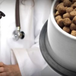 Veterinarians feel that raw cat and dog food threatens their livelihoods