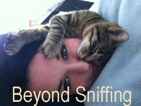 Why do cats sniff your face when sleeping?