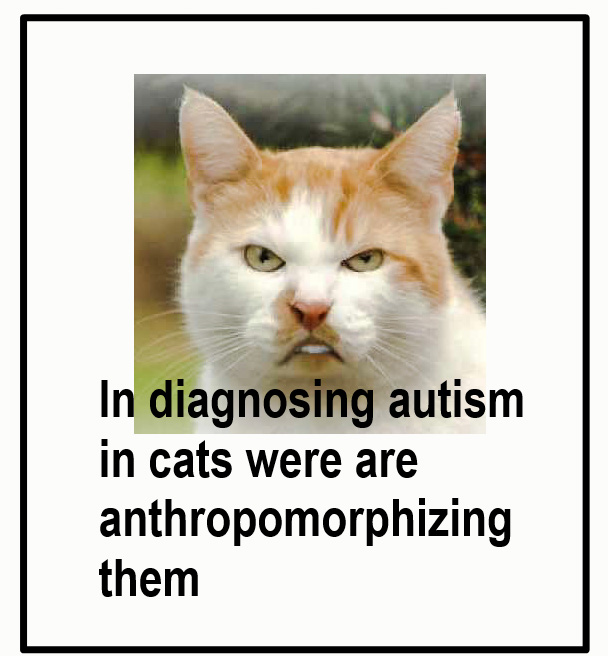 Is my cat autistic?