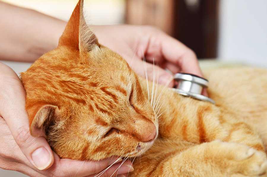 Cat Flu Facts For Kids