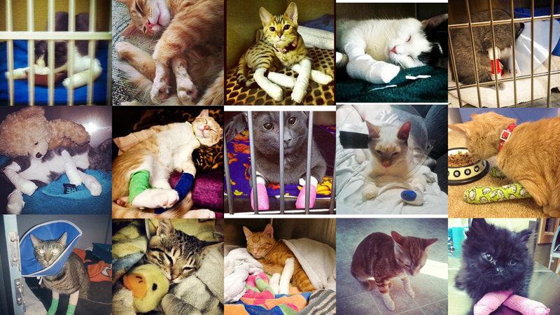 Yesterday's News Cat Litter condones the declawing of cats