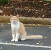 Feral cats at risk