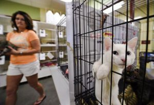 First amendment and animal shelters