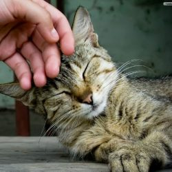 Human behavior beneficial to cats