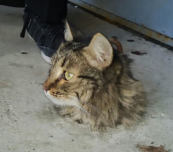 Strange photograph of cat's head sticking out of concrete floor