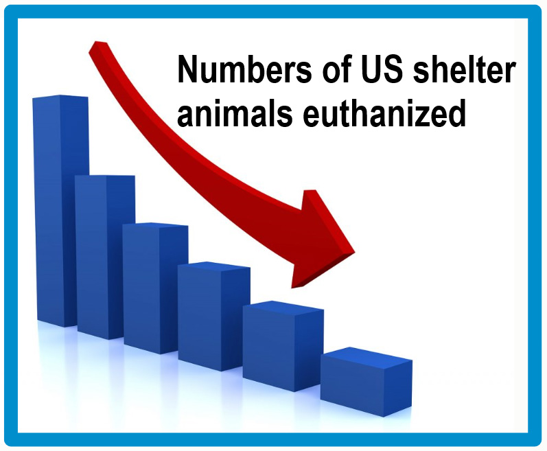 45% reduction in animals euthanized at US shelters