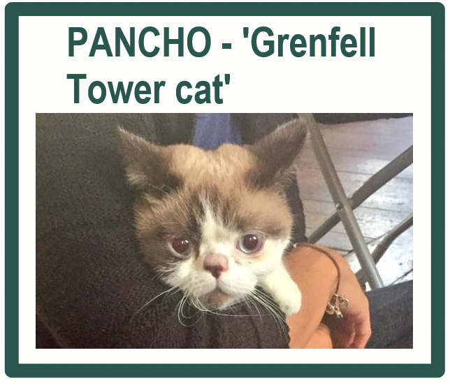 Grenfell Tower Cat