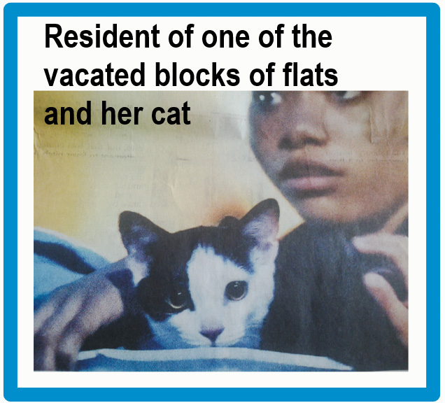 Grenfell Tower inferno has consequences for cats