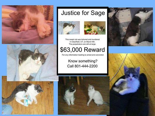 Justice for Sage