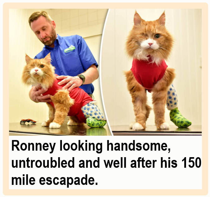 One eyed cat loses tail in 150 mile escapade and is treated with manuka honey