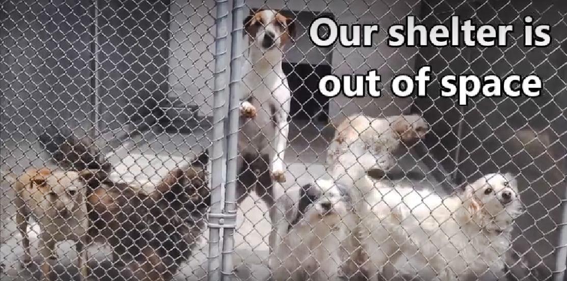 Simple Short Facebook Video Quadruples Adoptions For Sacramento Shelter