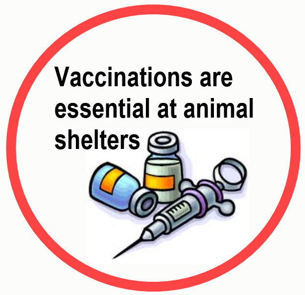 Vaccinations are essential at animal shelters