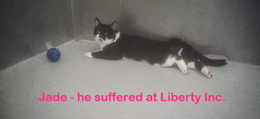 Jade he suffered at Liberty Inc. an animal testing lab