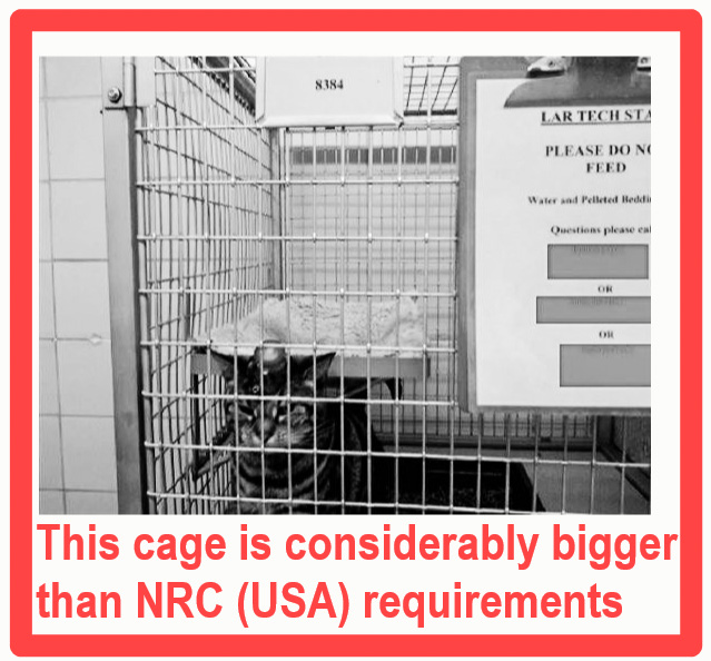 The cage size of laboratory cats will shock you