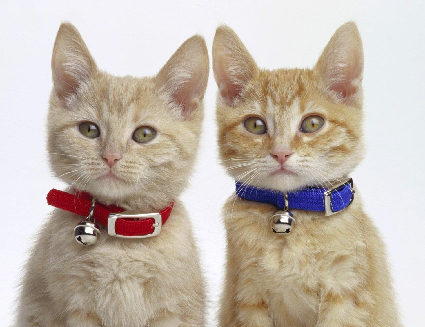 Brother and sister cats - who is the more affectionate?