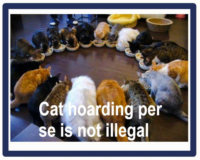 Is cat hoarding illegal?