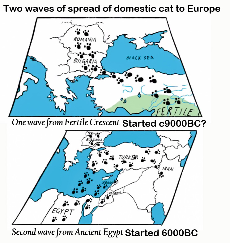 Two waves of spread of domestic cat to Europe