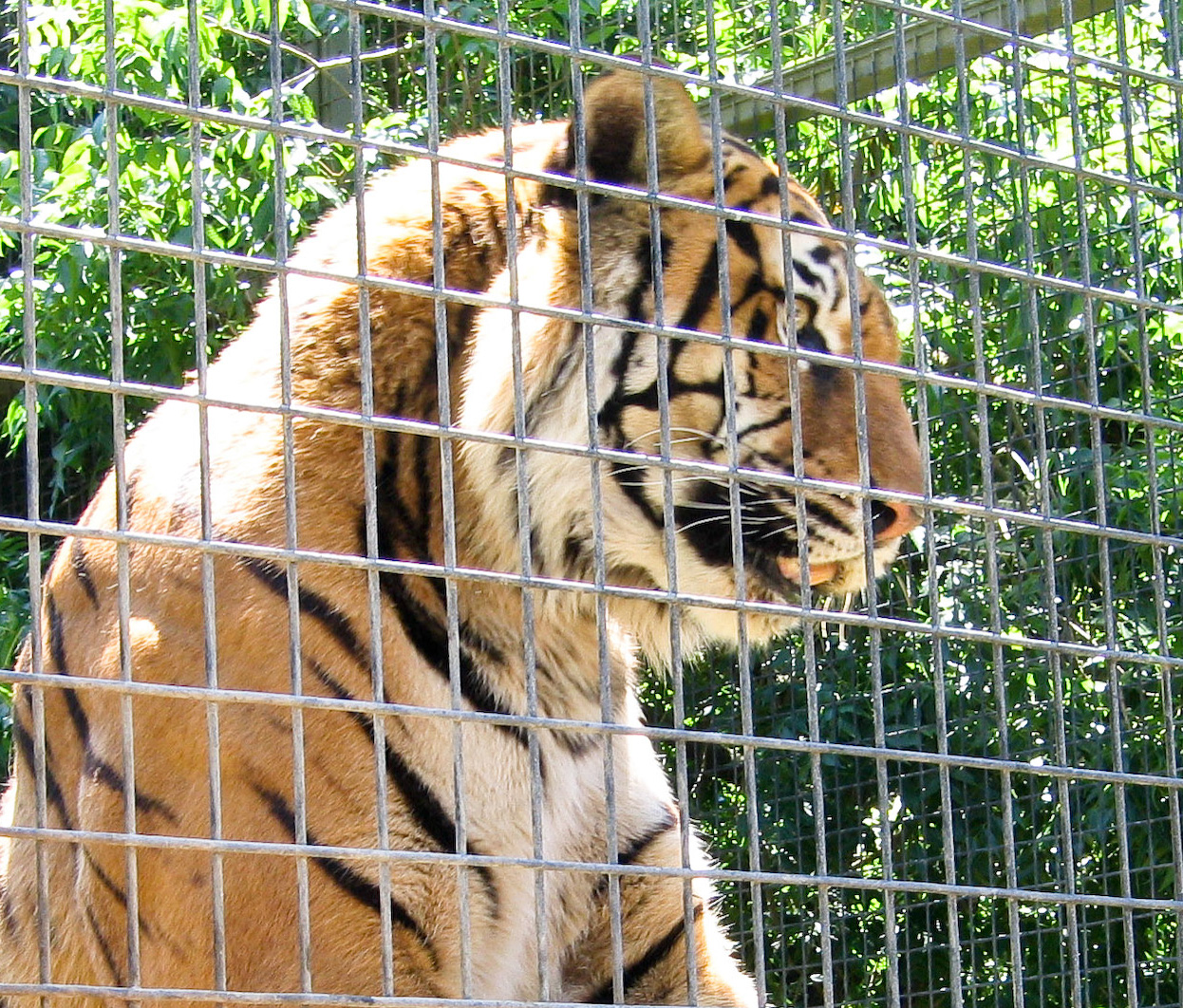 Do zoos help conservation?