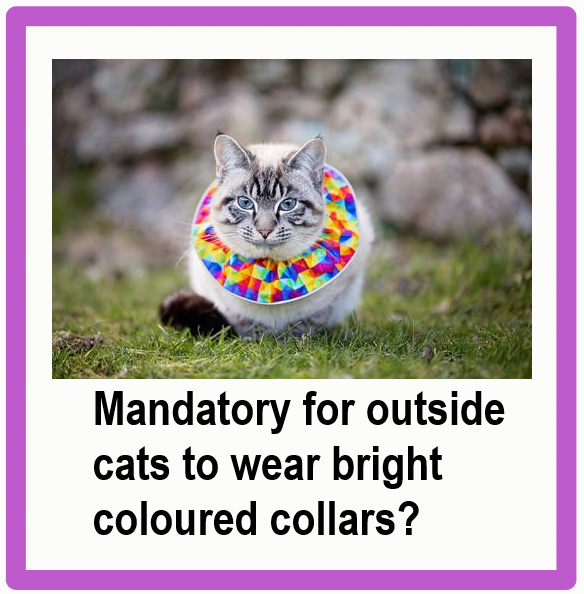 New law: outside cats must wear wide, brightly coloured collars