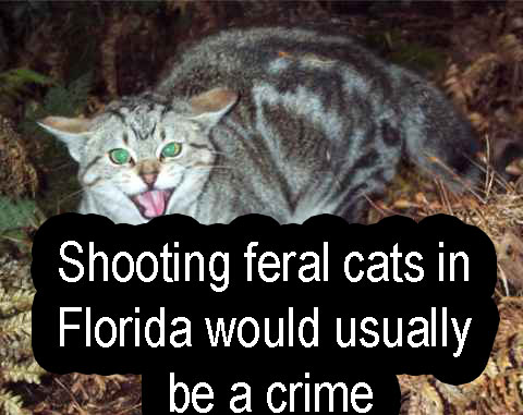 Shooting feral cats in Florida would usually be a crime