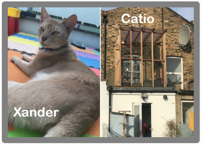 Abyssinian cat stolen after catio ordered to be removed