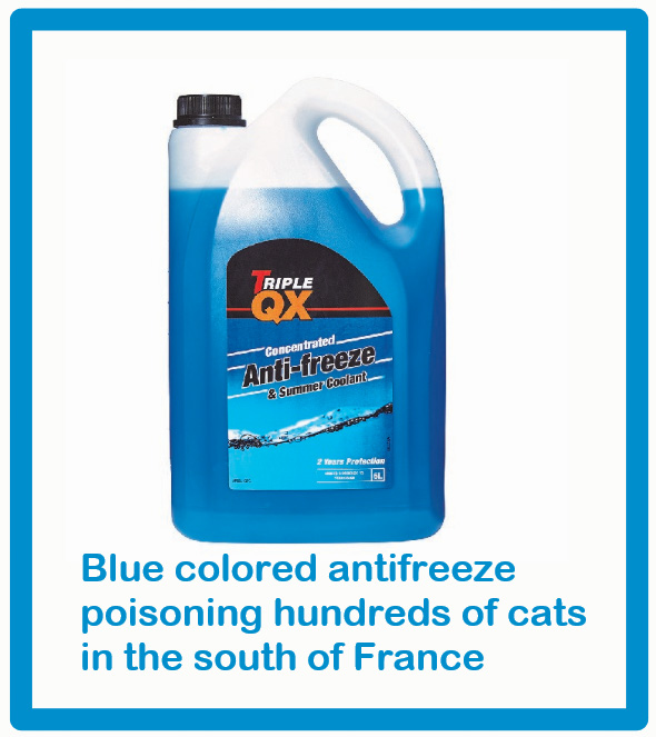 Blue colored antifreeze poisoning hundreds of cats in South of France