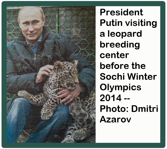 Can Putin really favour wildlife conservation over financial profit and business?