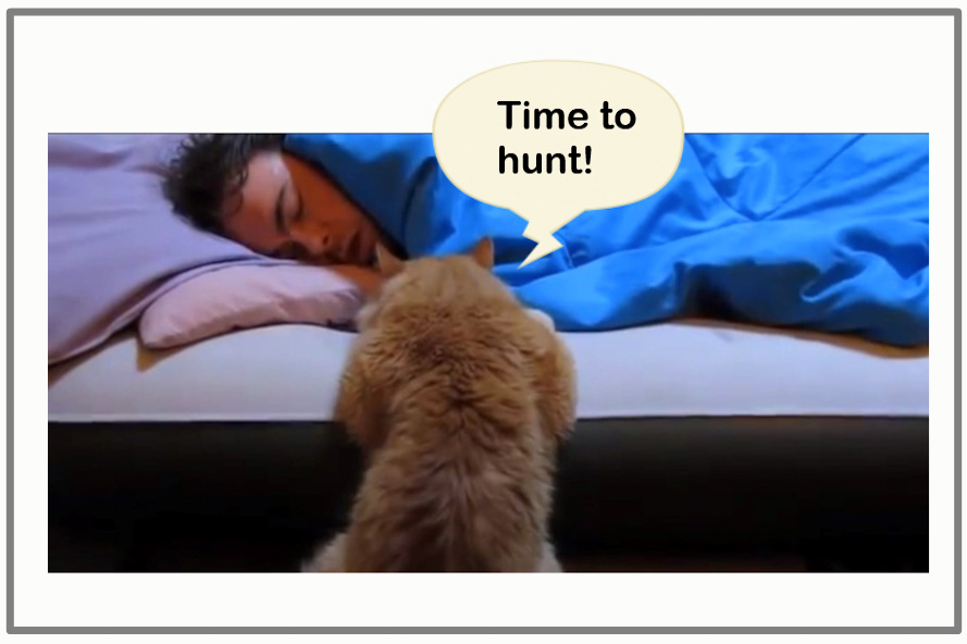 My cat disturbs me in the night