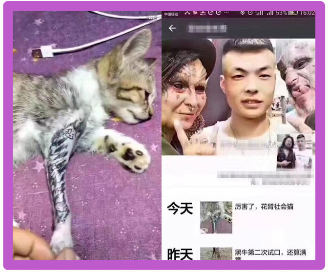 Chinese tattoo artist does it to his kitten