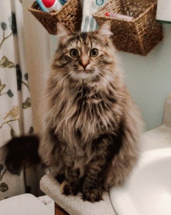 Super looking cat