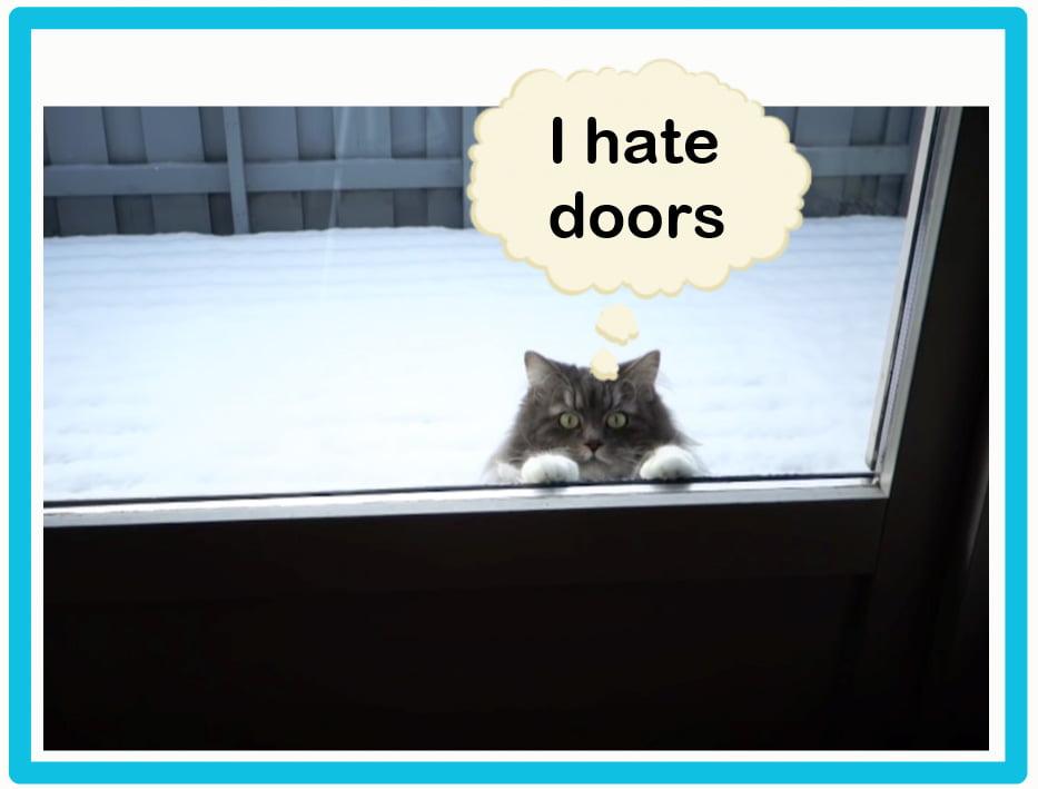 Cats hate doors