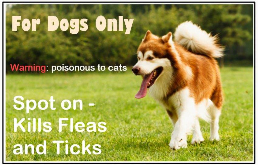 Dog flea treatment packaging needs to be changed to protect cats