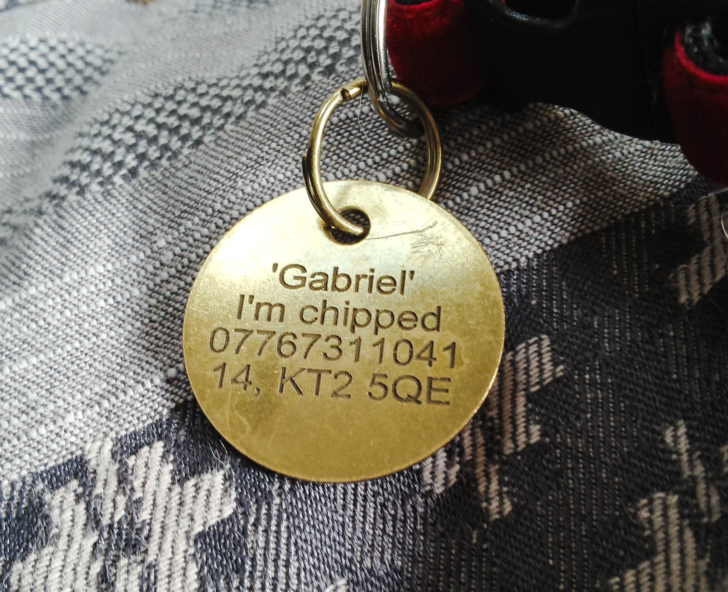 Cat's ID tag showing the layout of the information