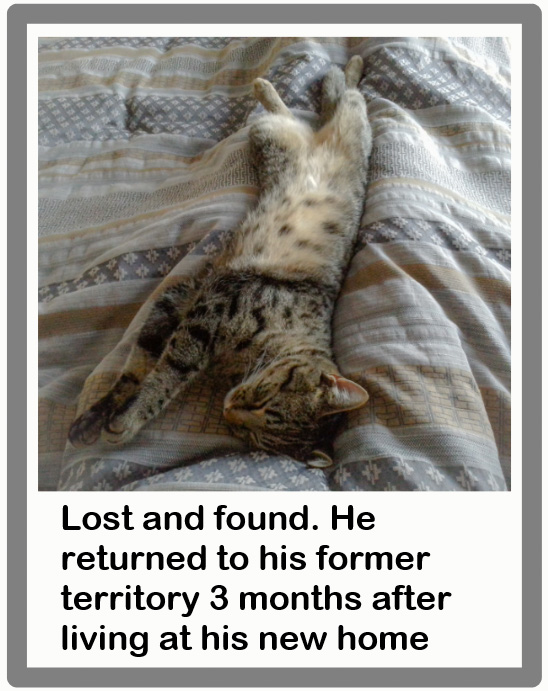 Lost cat returned to former territory 3 months after moving