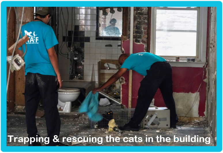 Building developer allegedly tried to refurbish building with abandoned cats in it