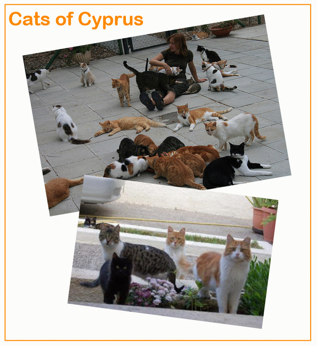 Cats of Cyprus outweight humans in population size
