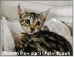 Cat thrown from car in Palm Beach